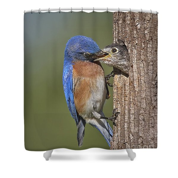 Breakfast Is Now Being Served. Shower Curtain by Susan Candelario