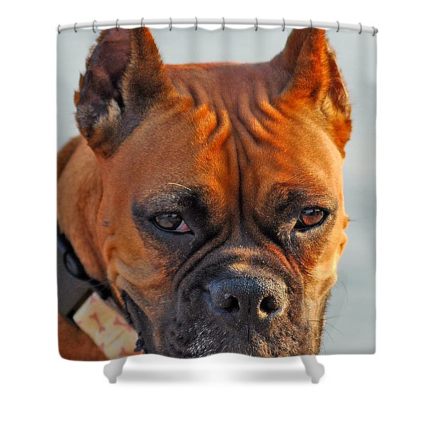 Bring It On Shower Curtain by Joann Vitali