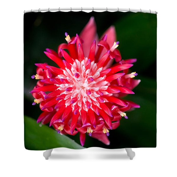 Bromeliad bloom Shower Curtain by Rich Franco