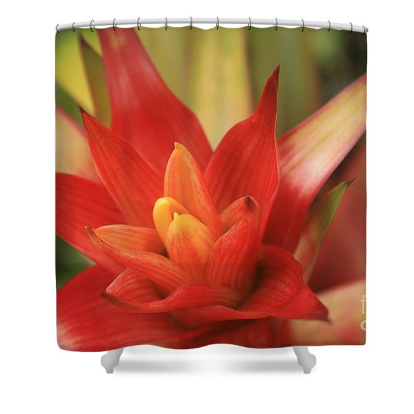 Bromeliad Shower Curtain by Sharon Mau