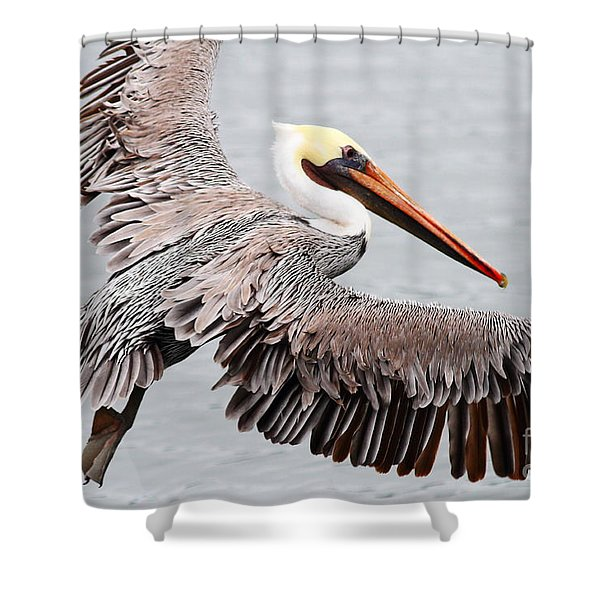 Brown Pelican . 7d8234 Shower Curtain by Wingsdomain Art and Photography