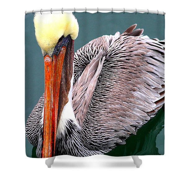 Brown Pelican . 7d8287 Shower Curtain by Wingsdomain Art and Photography