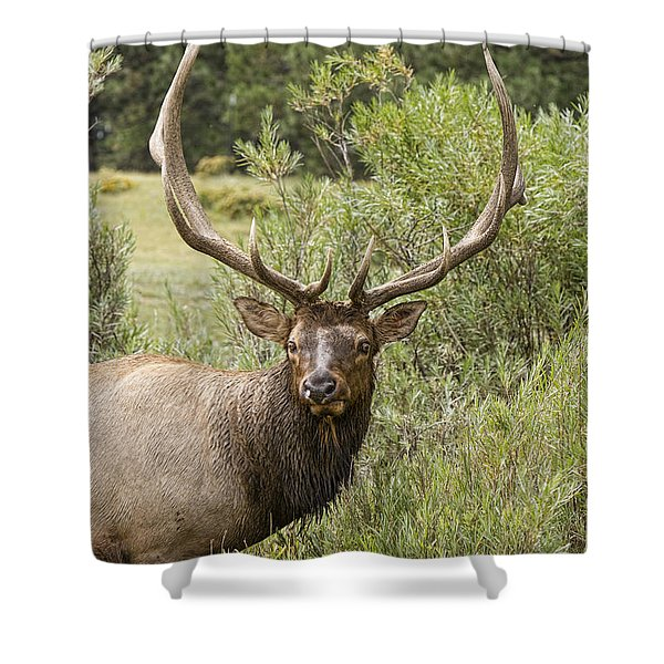 Bull Elk Eyes Shower Curtain by James BO  Insogna