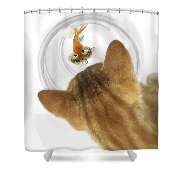 Cat Peering Into Fishbowl Shower Curtain by Darwin Wiggett