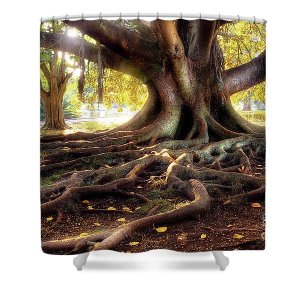 Centenarian Tree Shower Curtain by Carlos Caetano