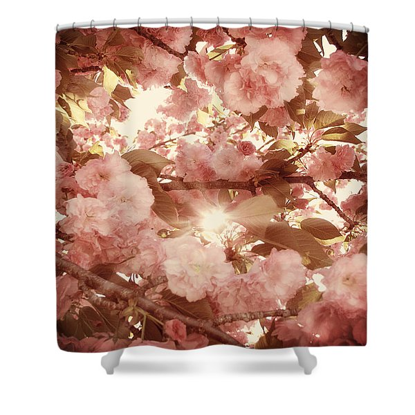 Cherry Blossom Sky Shower Curtain by Amy Tyler