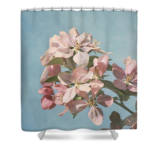 Cherry Blossoms Shower Curtain by Kim Hojnacki