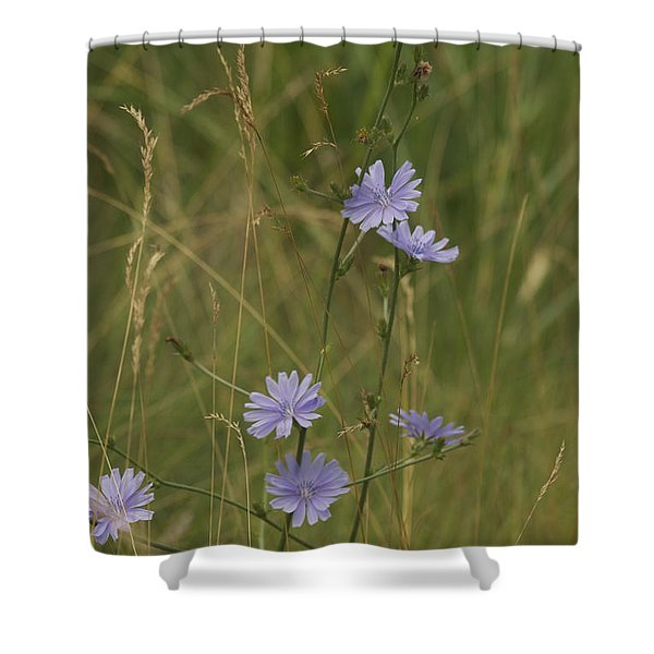 chicory 2765 Shower Curtain by Michael Peychich