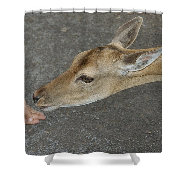 Child feeding deer Shower Curtain by Matthias Hauser