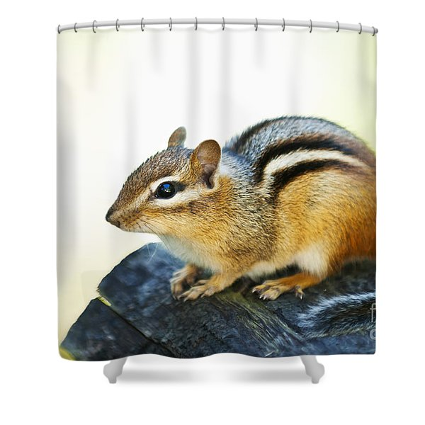 Chipmunk Shower Curtain by Elena Elisseeva