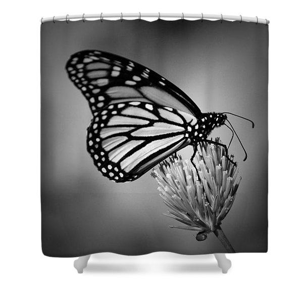 CLASSIC BEAUTY Shower Curtain by Skip Willits