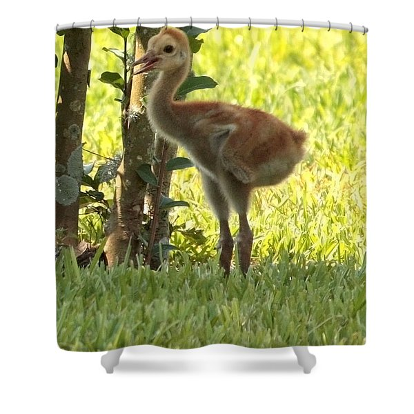 Closeup of Sandhill Baby Shower Curtain by Carol Groenen