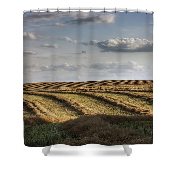 Clouds Over Canola Field On Farm Shower Curtain by Dan Jurak