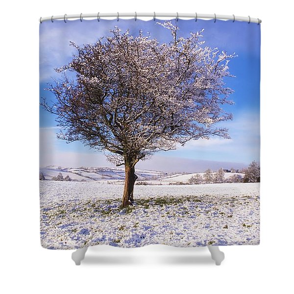 Co Antrim, Ireland Hawthorn Tree Known Shower Curtain by The Irish Image Collection