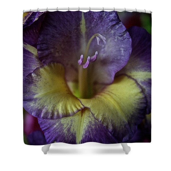Complimentary Colors Shower Curtain by Susan Herber