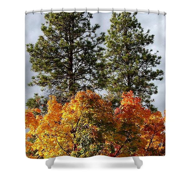Country Color 24 Shower Curtain by Will Borden
