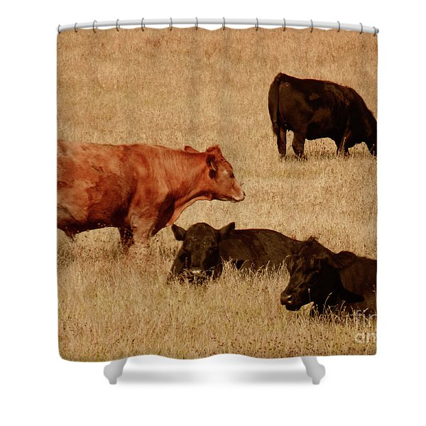 Cows Shower Curtain by Methune Hively