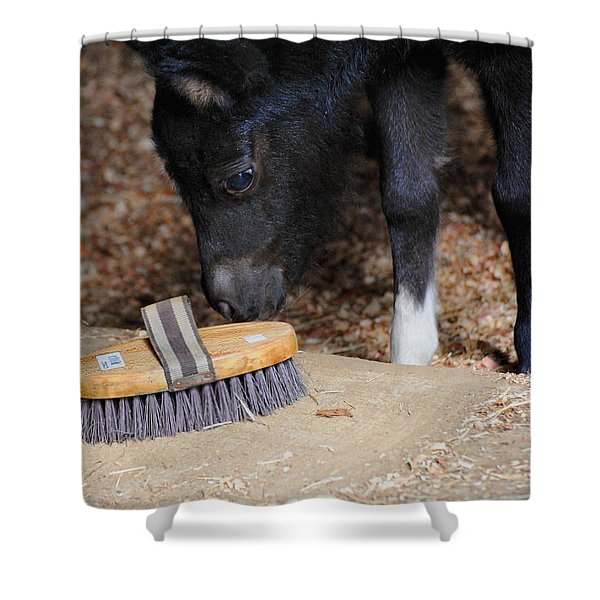 Curious Miniature Pony Shower Curtain by Jai Johnson