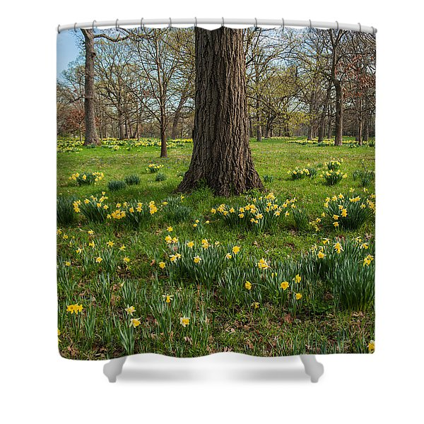 Daffodil Glade Number 2 Shower Curtain by Steve Gadomski