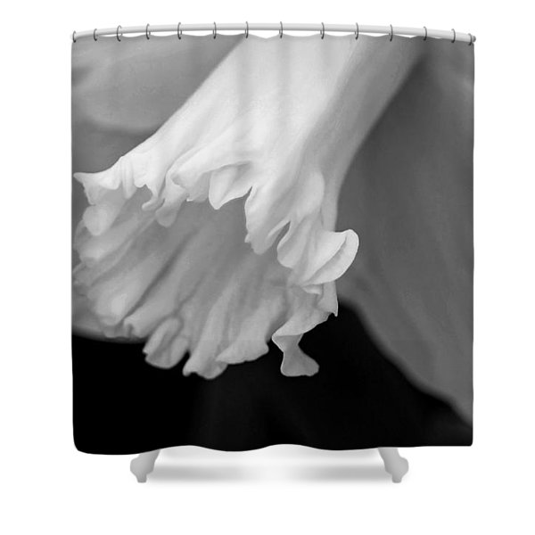 Daffodil Shower Curtain by Lisa  Phillips