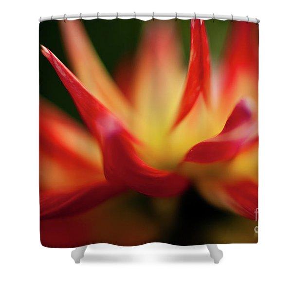 Dahlia Feuer Shower Curtain by Mike Reid