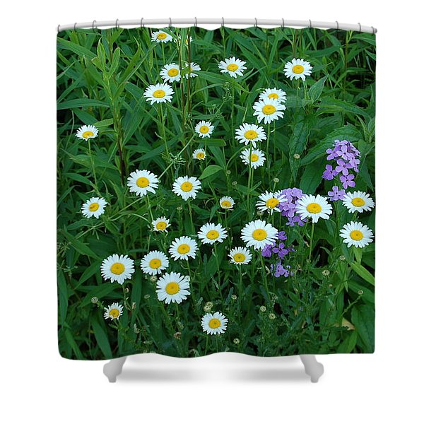Daisies Shower Curtain by Aimee L Maher Photography and Art