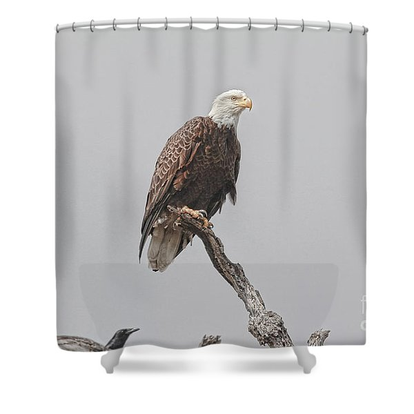 Dead Tree Pose Shower Curtain by Deborah Benoit