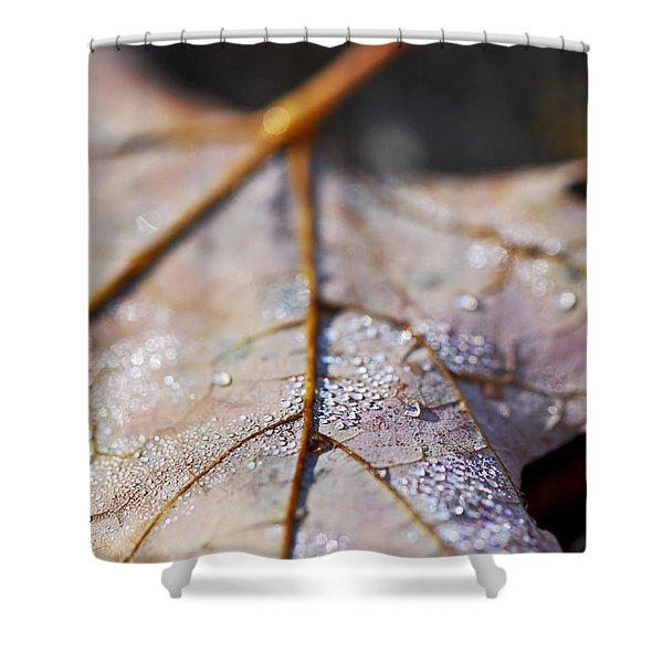 Dewy Leaf Shower Curtain by Elena Elisseeva