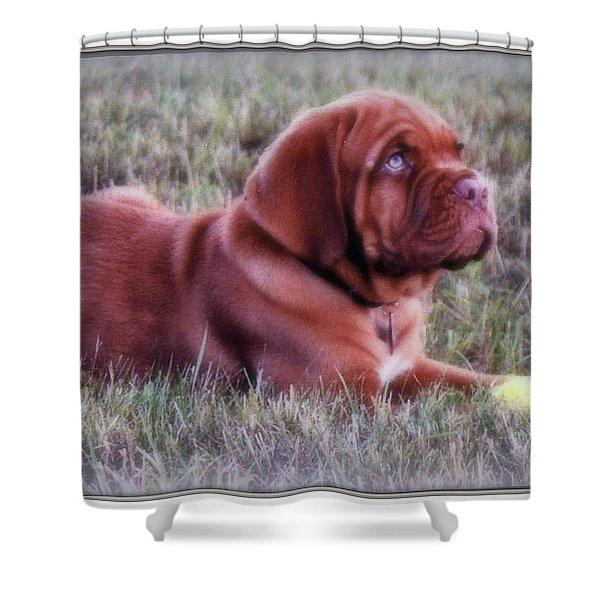Dogue De Bordeaux Shower Curtain by Kay Novy