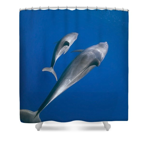 Dolphin And A  Cub Shower Curtain by Tom Peled
