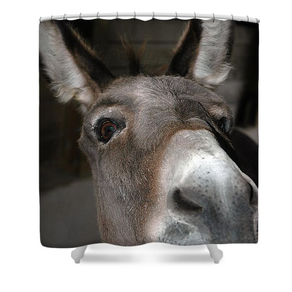 Donkey Sniffs Shower Curtain by LeeAnn McLaneGoetz McLaneGoetzStudioLLCcom