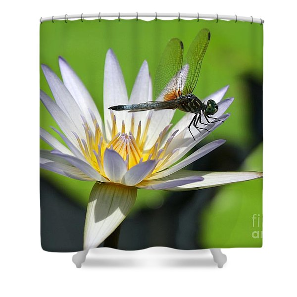 Dragonfly And The Water Lily Shower Curtain by Sabrina L Ryan