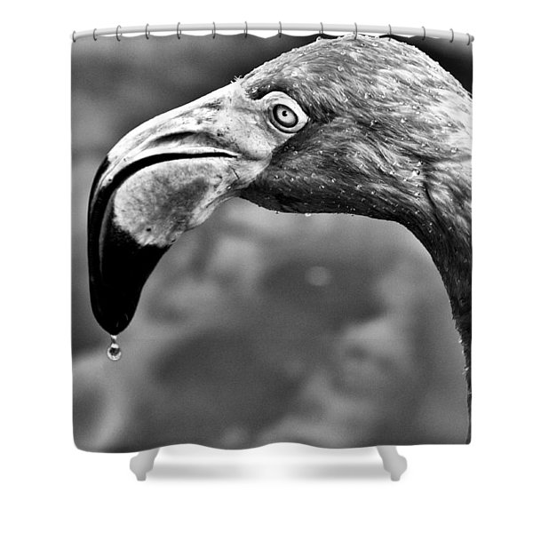 Dripping Flamingo - Bw Shower Curtain by Christopher Holmes