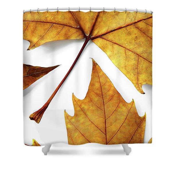 Dry Leafs Shower Curtain by Carlos Caetano