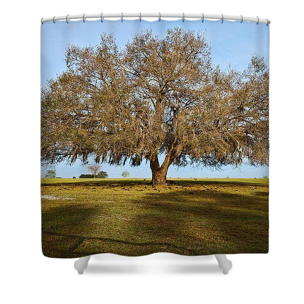 Early Morning Oak Shower Curtain by Christopher Holmes