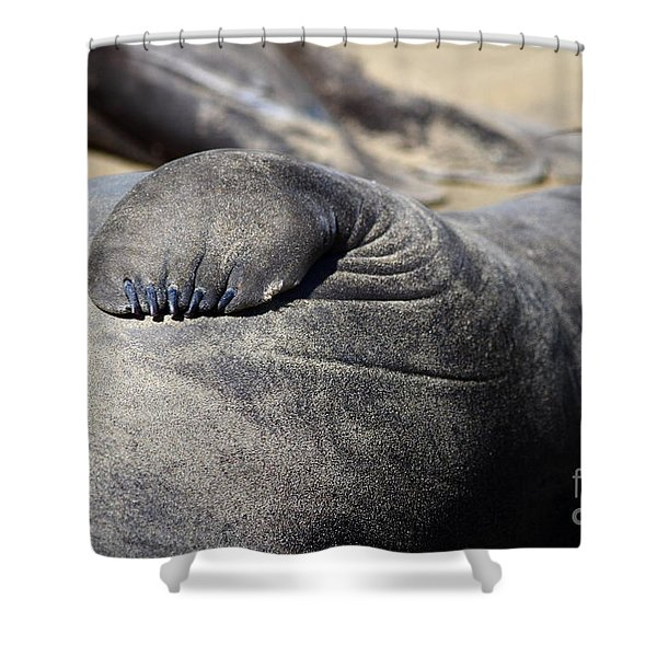 Elephant Seal Fin Nails . 7D16083 Shower Curtain by Wingsdomain Art and Photography