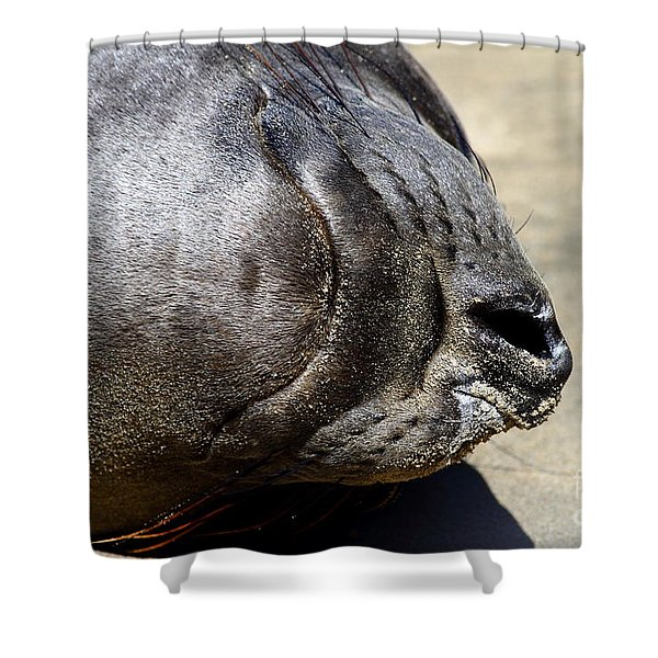 Elephant Seal Snout . 7d16085 Shower Curtain by Wingsdomain Art and Photography