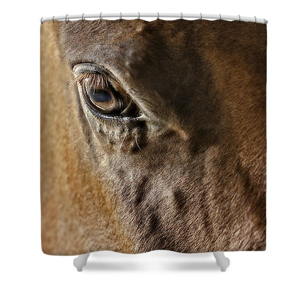 Eye Of The Horse Shower Curtain by Susan Candelario