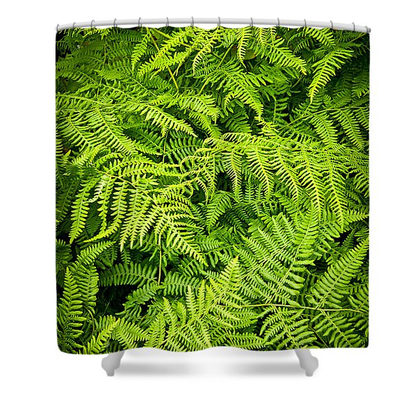 Fern Shower Curtain by Elena Elisseeva