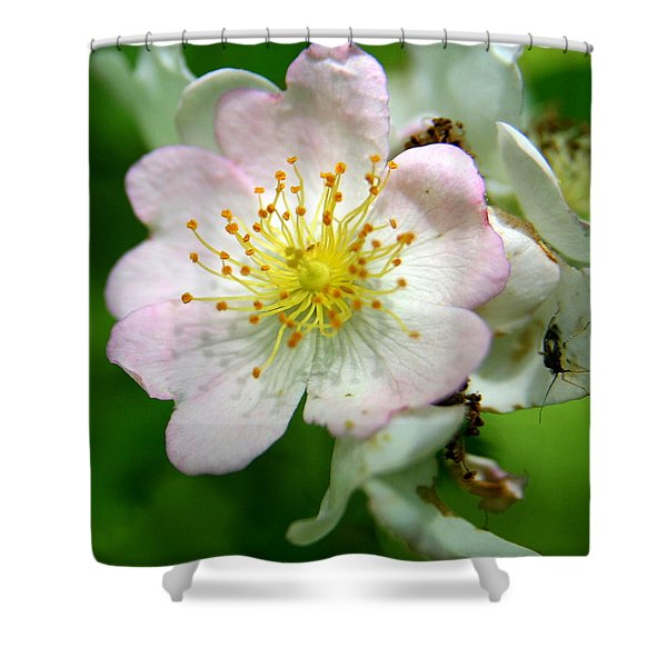 Floral Fireworks Shower Curtain by Neal  Eslinger