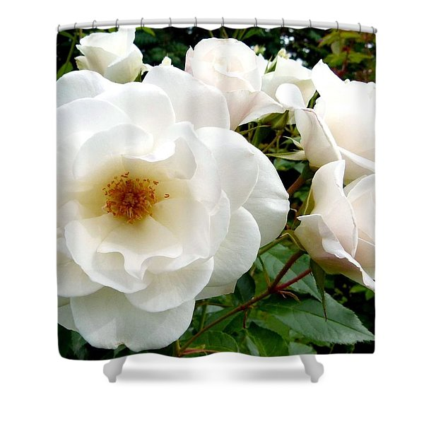 Flourishing Iceberg Roses Shower Curtain by Will Borden