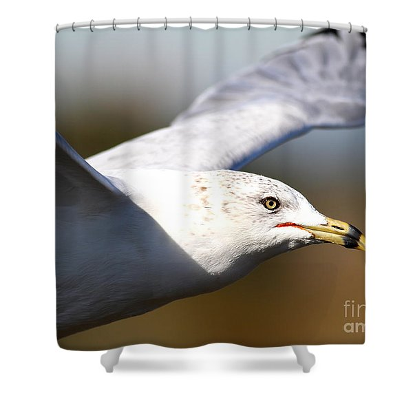 Flying Seagull Closeup Shower Curtain by Wingsdomain Art and Photography