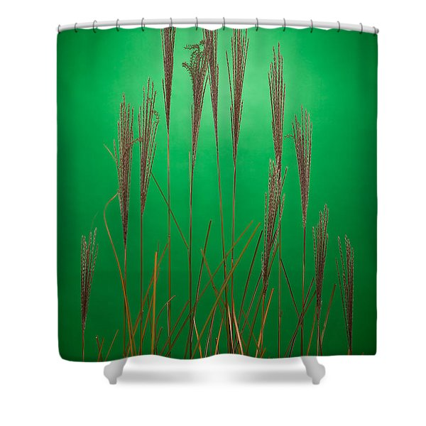 Fountain Grass In Green Shower Curtain by Steve Gadomski