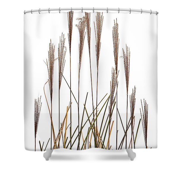 Fountain Grass In White Shower Curtain by Steve Gadomski