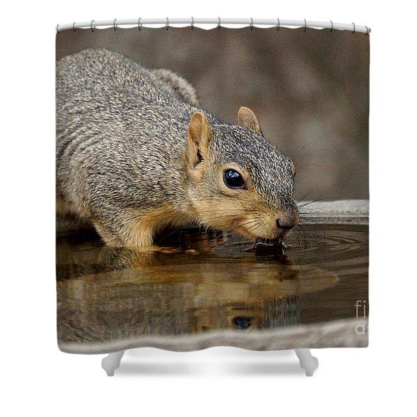 Fox Squirrel Shower Curtain by Lori Tordsen
