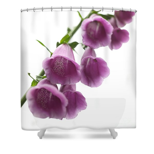 Foxglove Flowers Shower Curtain by Tony Cordoza