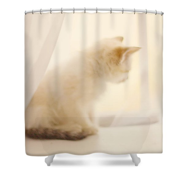 Fresh Wonder Shower Curtain by Amy Tyler
