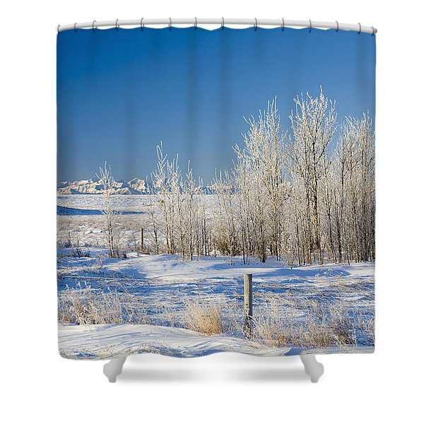 Frost-covered Trees In Snowy Field Shower Curtain by Michael Interisano