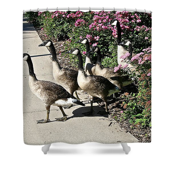 Garden Geese Parade Shower Curtain by Susan Herber