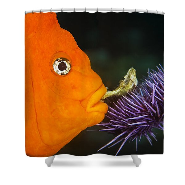 Garibaldi Damselfish Shower Curtain by Mike Raabe